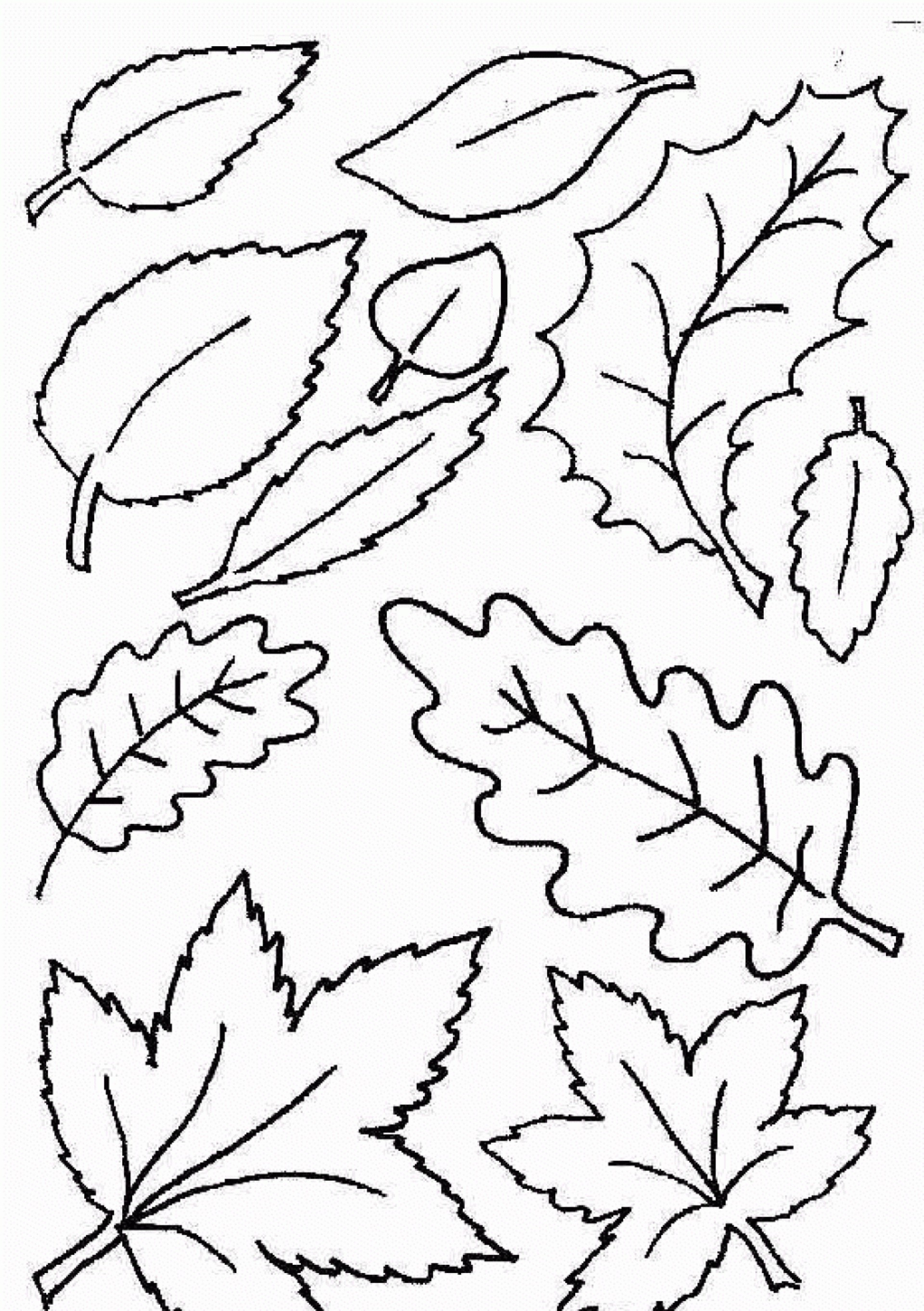 028 Template Ideas Free Printable Leaf Best Fall Leaves Coloring - Free Printable Fall Leaves Coloring Pages