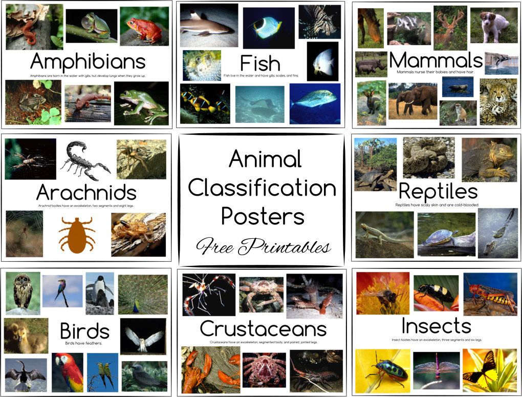Animal Classification Posters And Games - Free Printables - Free Printable Animal Classification Cards