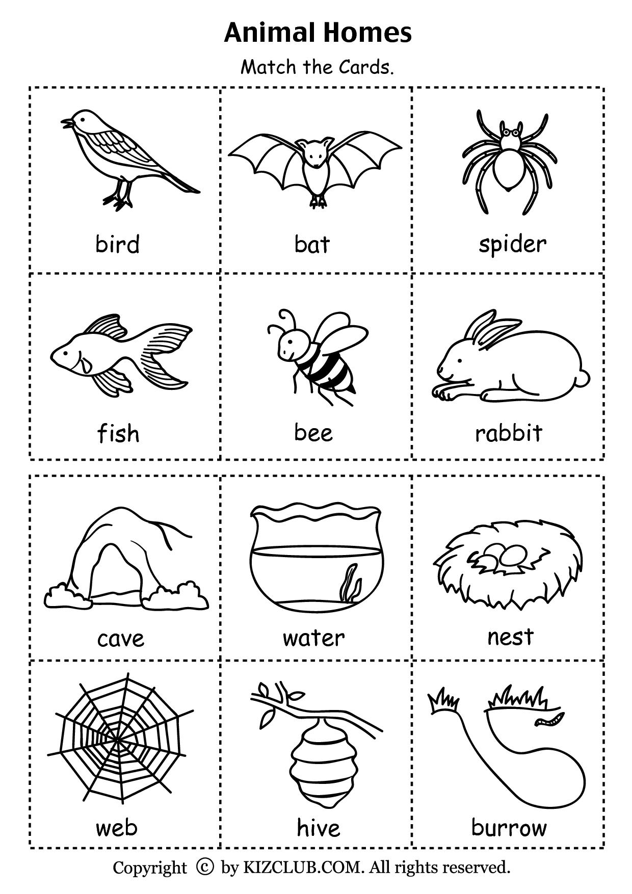 Animal Homes (Pdf) | Stuff To Buy | Pinterest | Animal Habitats - Free Printable Worksheets Animal Habitats