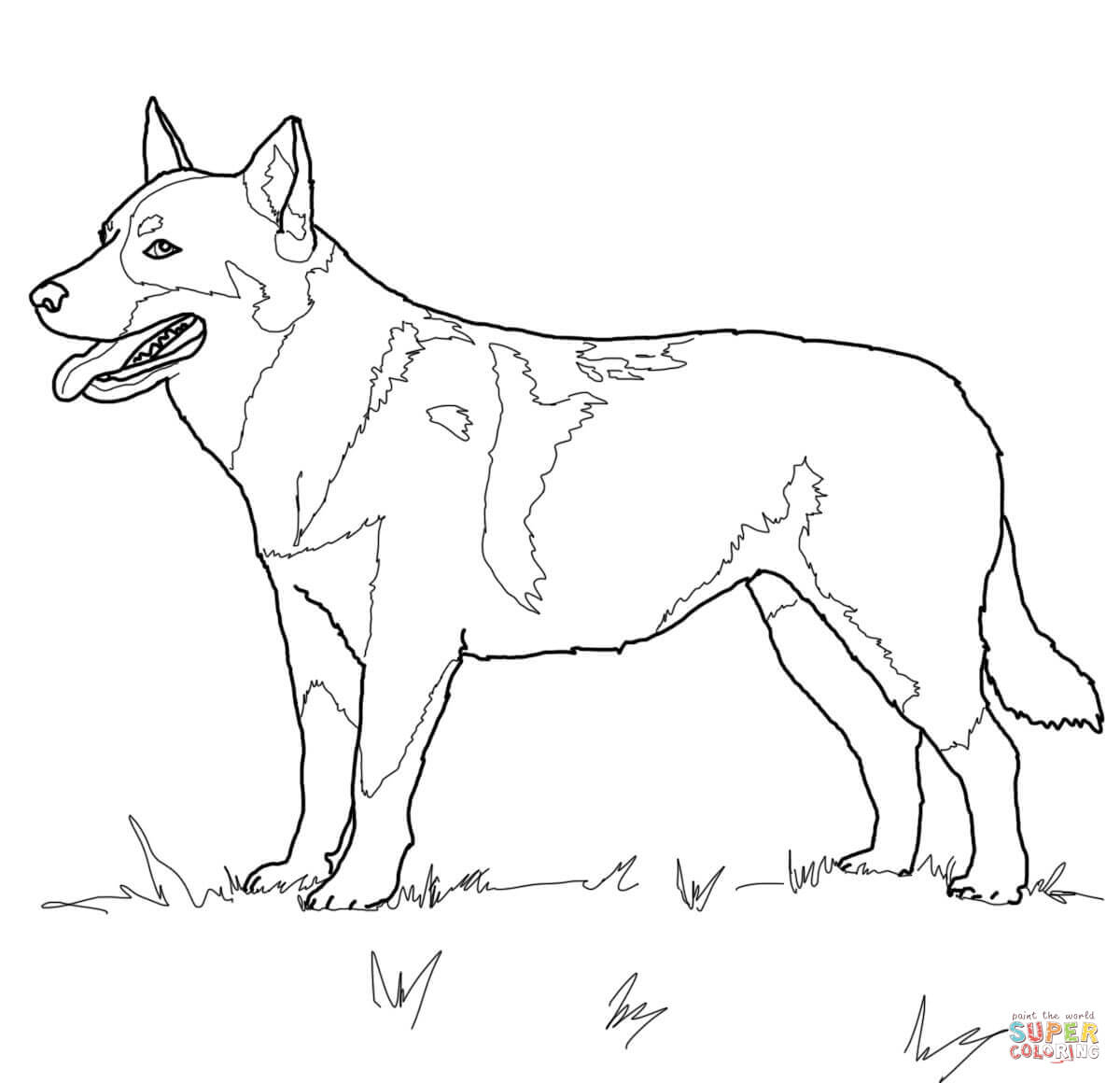 Australian Cattle Dog Coloring Page   Free Printable Coloring Pages - Colouring Pages Dogs Free Printable