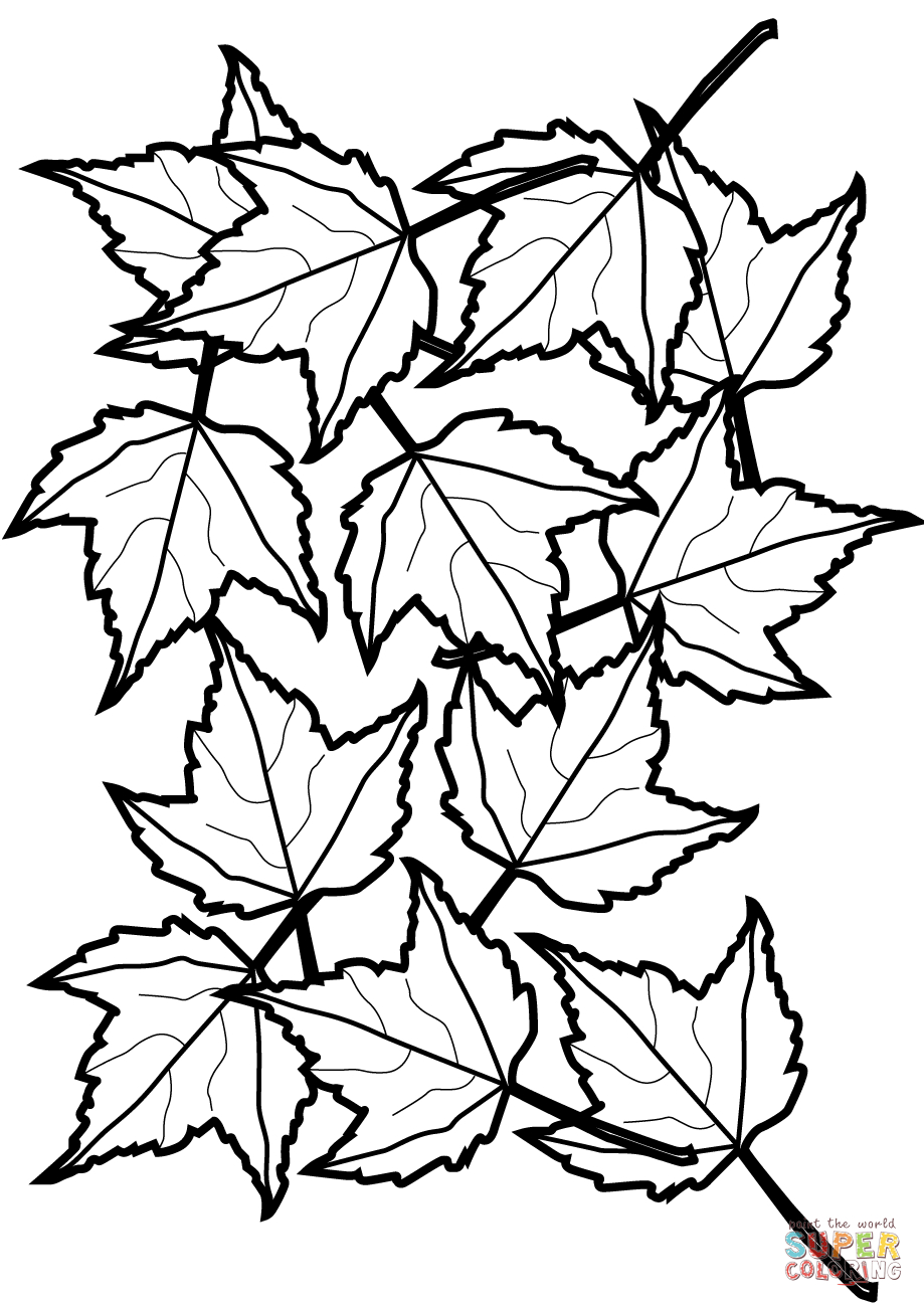 Autumn Maple Leaves Coloring Page | Free Printable Coloring Pages - Free Printable Leaf Coloring Pages