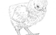 Free Printable Easter Baby Chick Coloring Pages