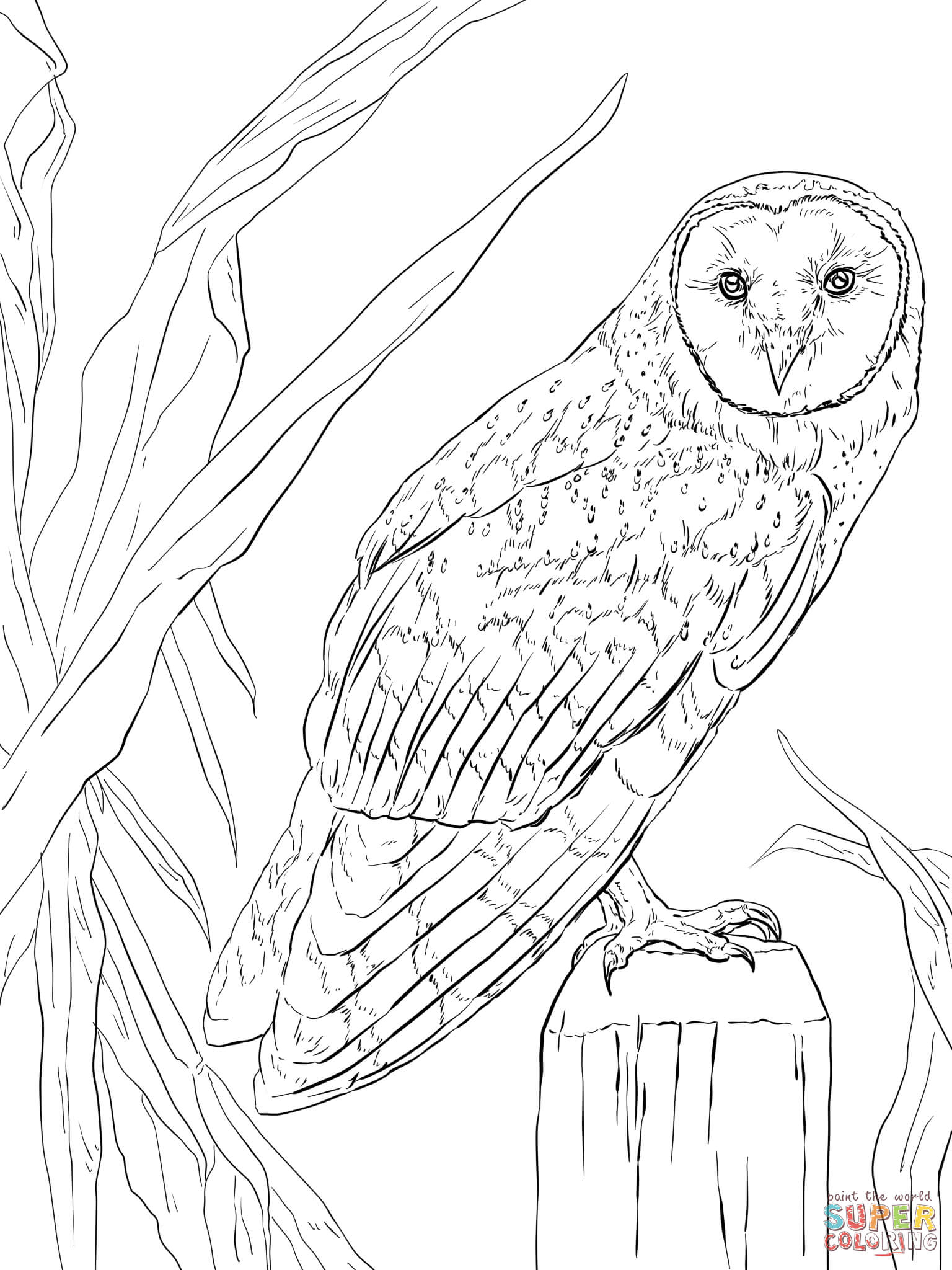 Barn Owl Coloring Page | Free Printable Coloring Pages - Free Printable Barn Coloring Pages