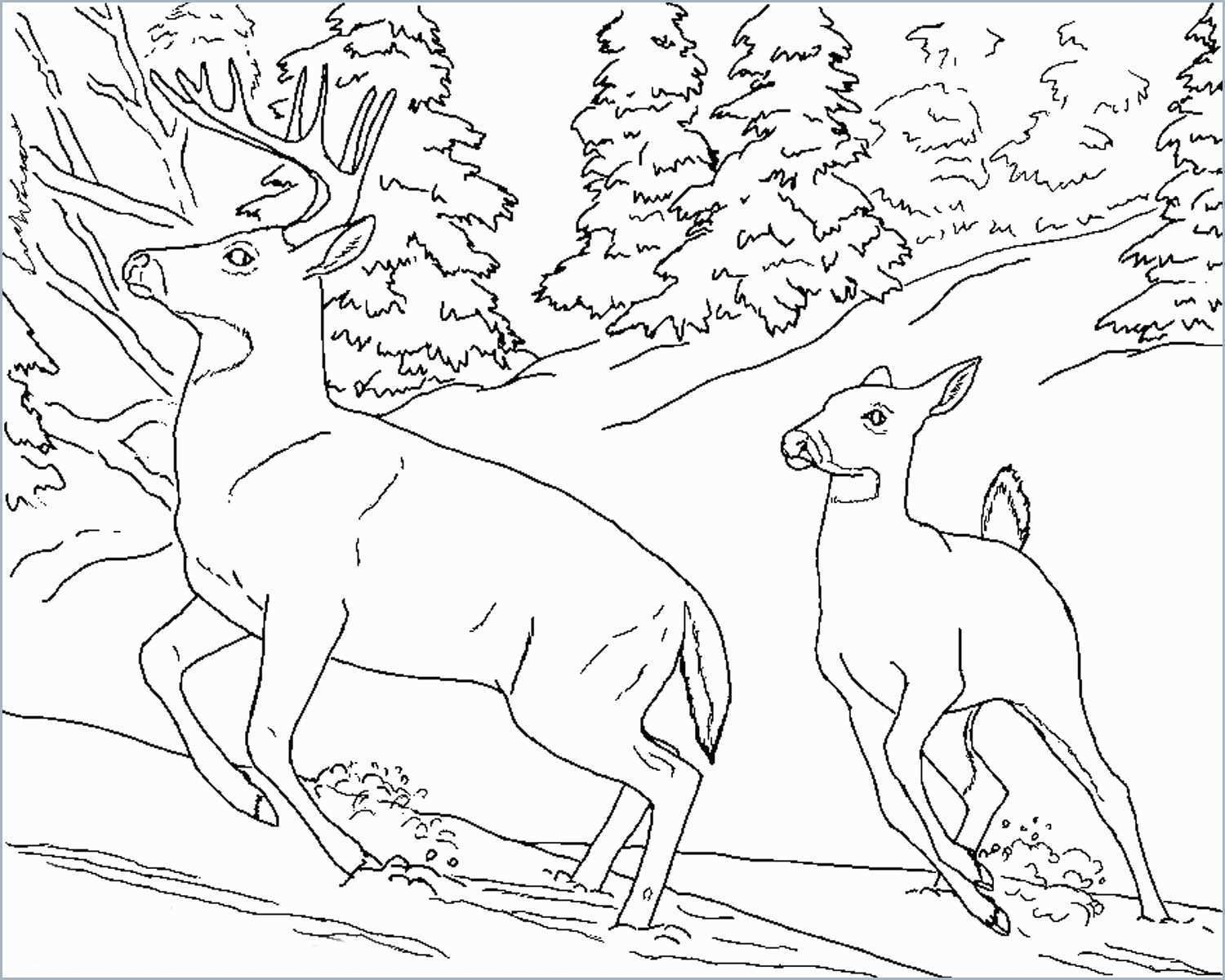Coloring Pages : Amazing Wild Animal Coloring Sheets Pages Book - Free Printable Wild Animal Coloring Pages