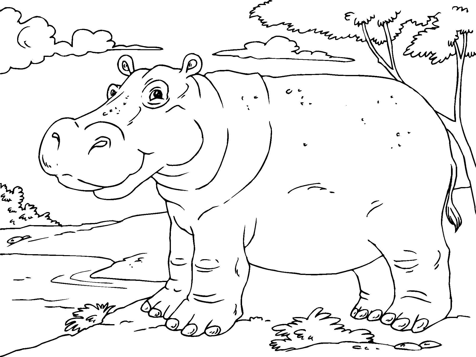 Colouring Pages Hippo Coloring Pages In Painting Free Coloring - Free Printable Hippo Coloring Pages