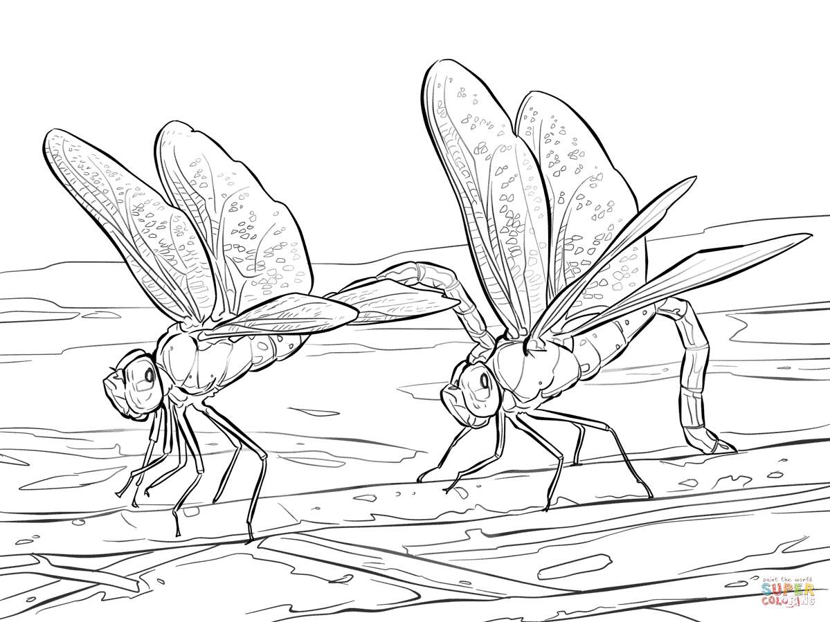 Dragonfly Coloring Pages   Free Coloring Pages - Free Printable Pictures Of Dragonflies