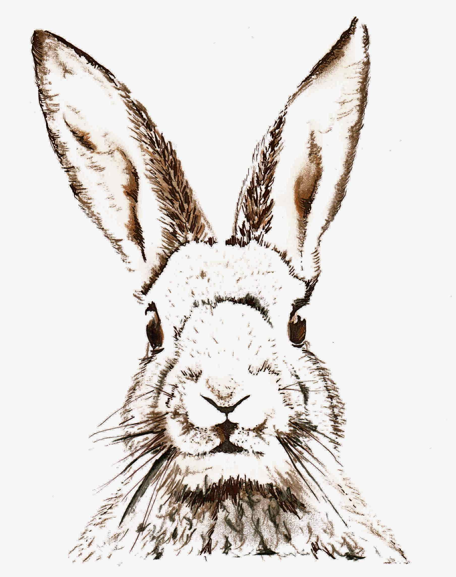 Easter Bunny Clipart To Print Collection - Free Printable Bunny Pictures