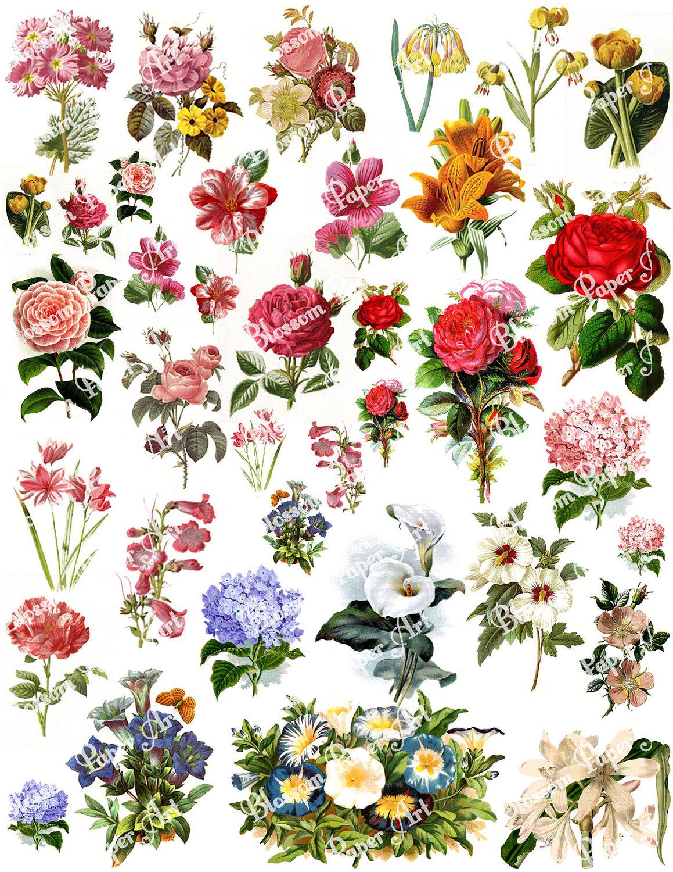 Flowers Collage Sheet Digital Scrapbook Scrapbooking   Etsy - Free Printable Decoupage Flowers