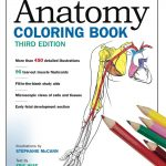 Free: Anatomy Coloring Book On Google#college #anatomy | Cc Cycle 3   Free Printable Muscle Flashcards