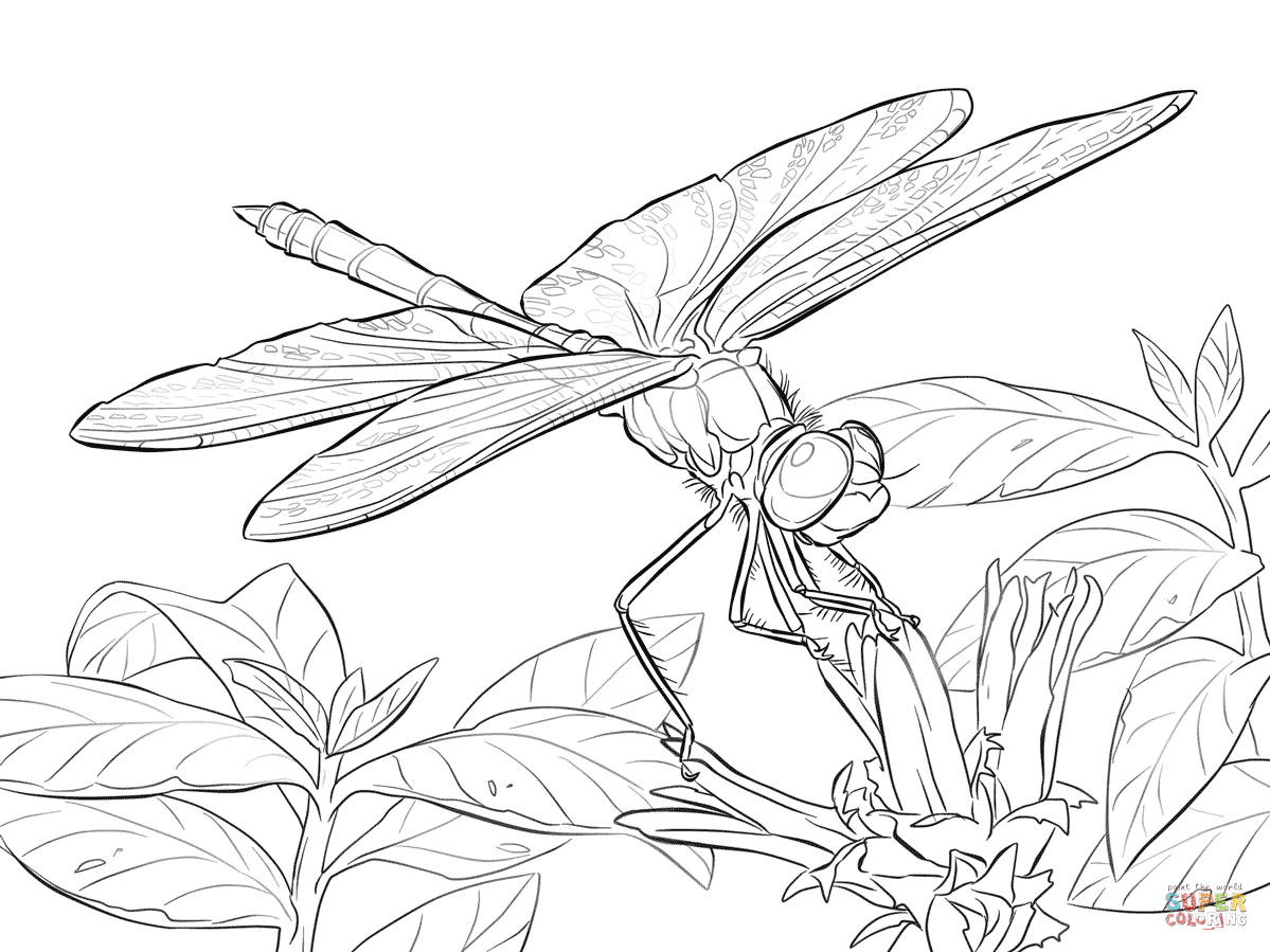 Free Dragonfly Coloring Pages For Adults | Yellow Winged Darter - Free Printable Pictures Of Dragonflies