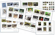 Free Printable Animal Classification Cards