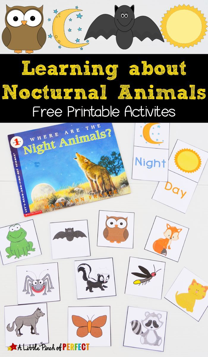 Free Nocturnal Animals Printables   Kindergarten   Nocturnal Animals - Free Printable Animal Classification Cards