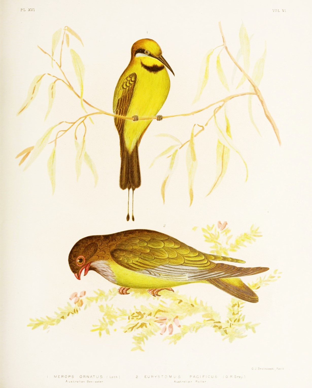 Free Printable Bird Art - Free Printable Images Of Birds