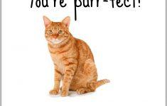 Free Printable Cat Fact Valentines | Suzy Homeschooler - Free Printable Cat Valentine Cards