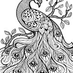 Free Printable Coloring Pages For Adults Only Image 36 Art   Free Printable Peacock Pictures
