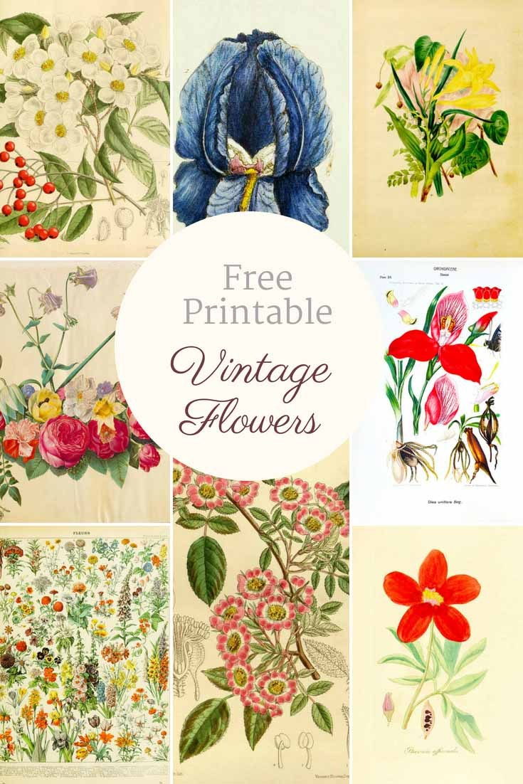 Free Printable Decoupage Flowers   Download Them And Try To Solve - Free Printable Decoupage Flowers