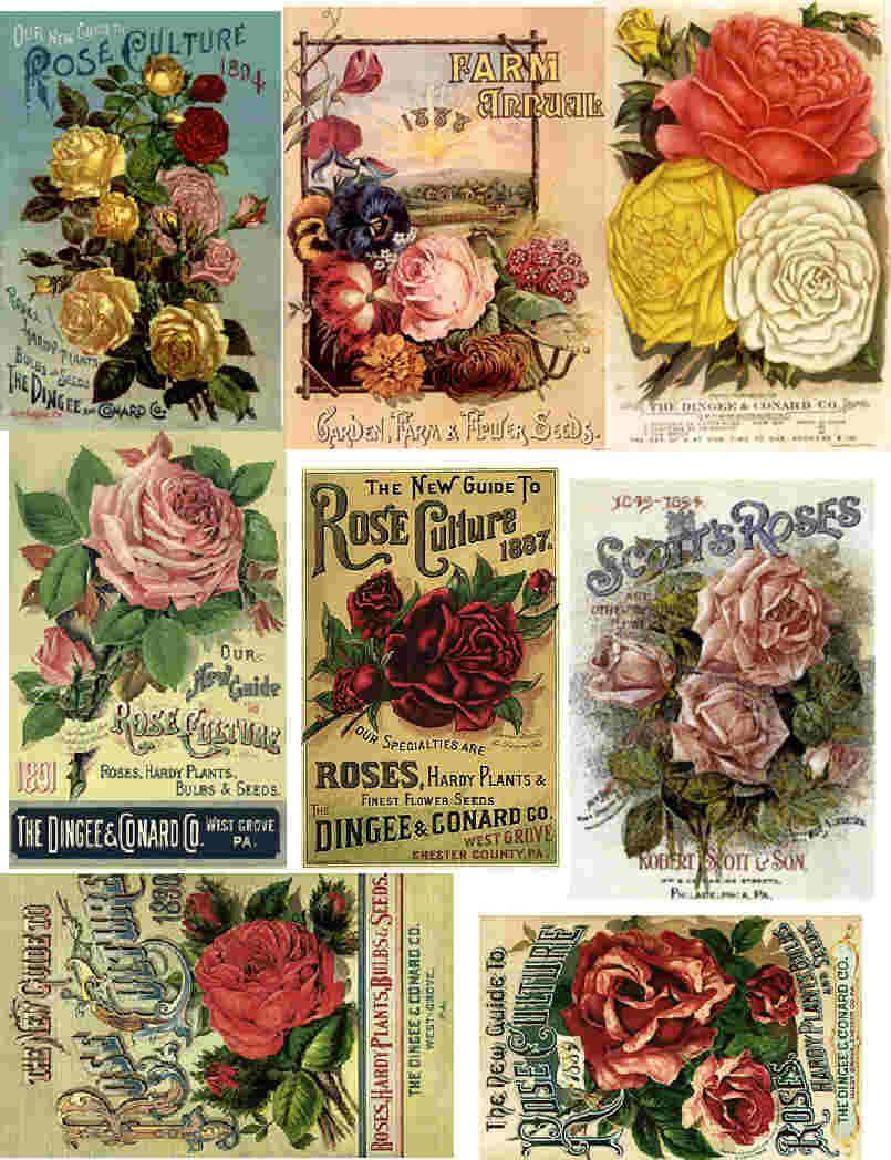 Free Printable Decoupage Papers   Decoupage Paper Collage Sheets - Free Printable Decoupage Flowers