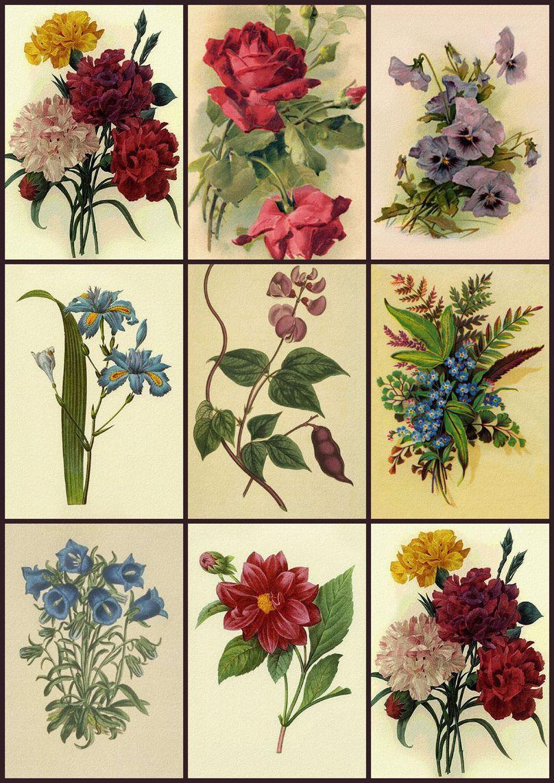 Free Printable Decoupage Papers   Digital Collage Sheet - Flower - Free Printable Decoupage Flowers