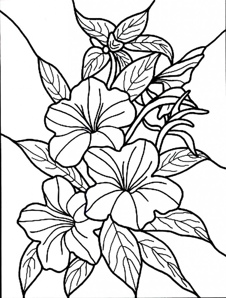 Free Printable Hibiscus Coloring Pages For Kids | Colouring, Drawing - Free Printable Hibiscus Coloring Pages