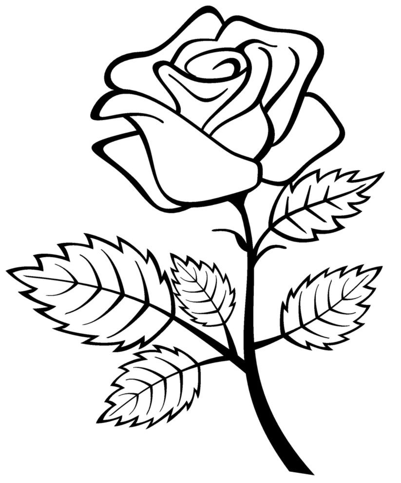 Free Printable Roses Coloring Pages For Kids | 1Rosez | Flower - Free Printable Roses