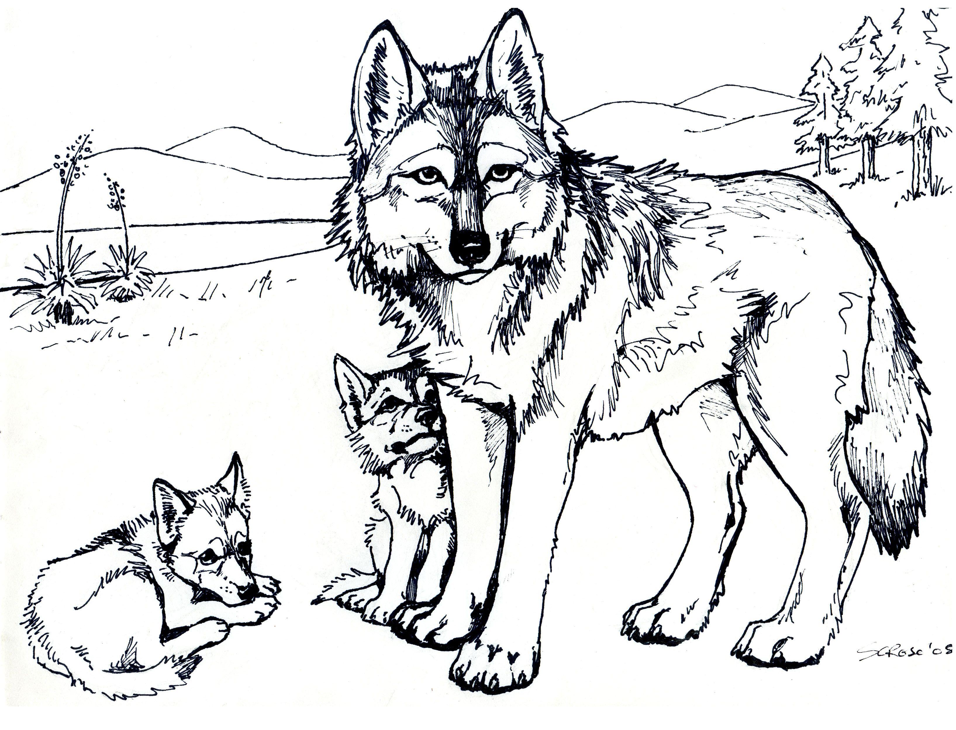 Free Printable Wolf Coloring Pages For Kids | Eden | Pinterest - Free Printable Realistic Animal Coloring Pages