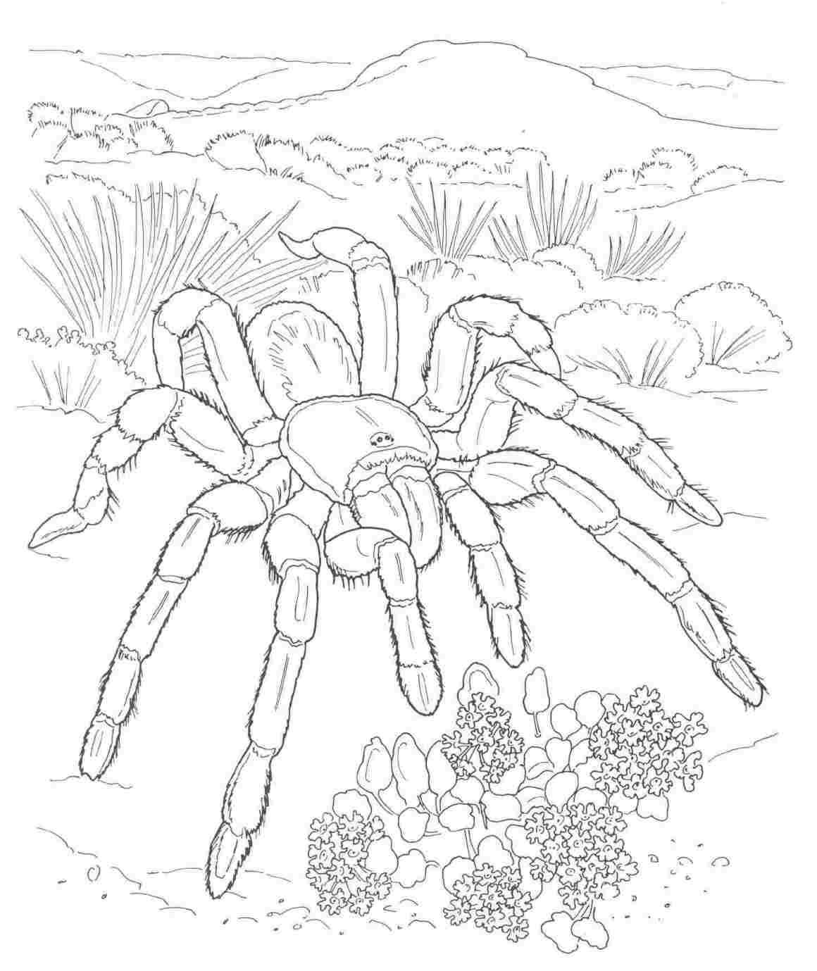 Free-Rhpinterestcom-Tartantula-Desert-Animals-And-Plants-Drawings - Free Printable Desert Animals