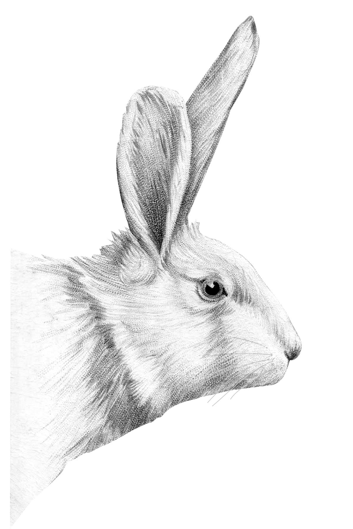 Giant Bunny Poster Free Printable » Little Inspiration - Free Printable Bunny Pictures