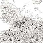Graceful Peacock Coloring Page | Free Printable Coloring Pages   Free Printable Peacock Pictures