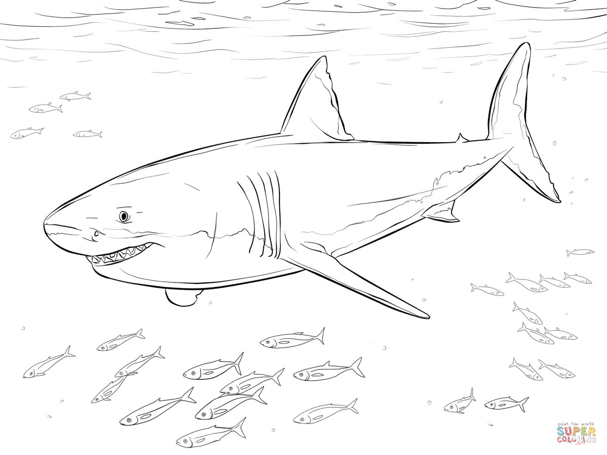 Great White Shark With Pilot Fishes Coloring Page | Free Printable - Free Printable Great White Shark Coloring Pages