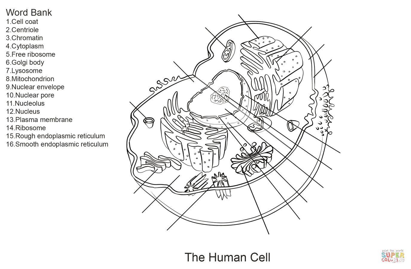 Human Cell Worksheet Coloring Page | Free Printable Coloring Pages - Free Printable Cell Worksheets