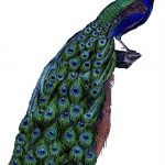 Instant Art Printable Download   Fabulous Colorful Peacock   The   Free Printable Peacock Pictures