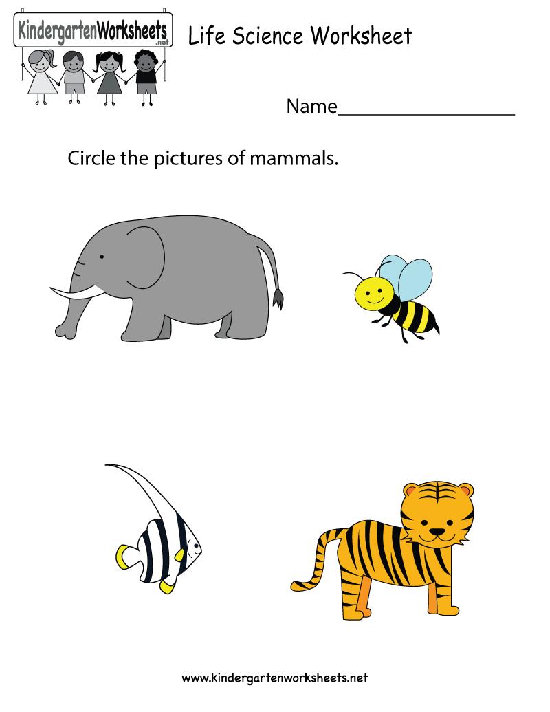 Life Science Worksheet - Free Kindergarten Learning Worksheet For Kids - Free Printable Worksheets For Kg1