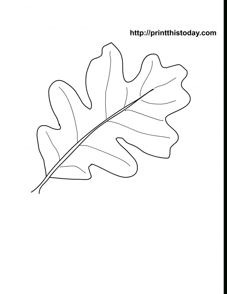 Free Printable Leaves