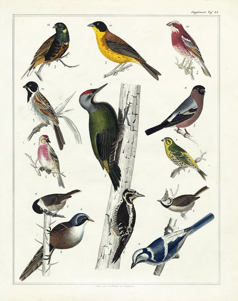 Over 25 Free Vintage Bird Printable Images | Remodelaholic #art - Free Printable Images Of Birds