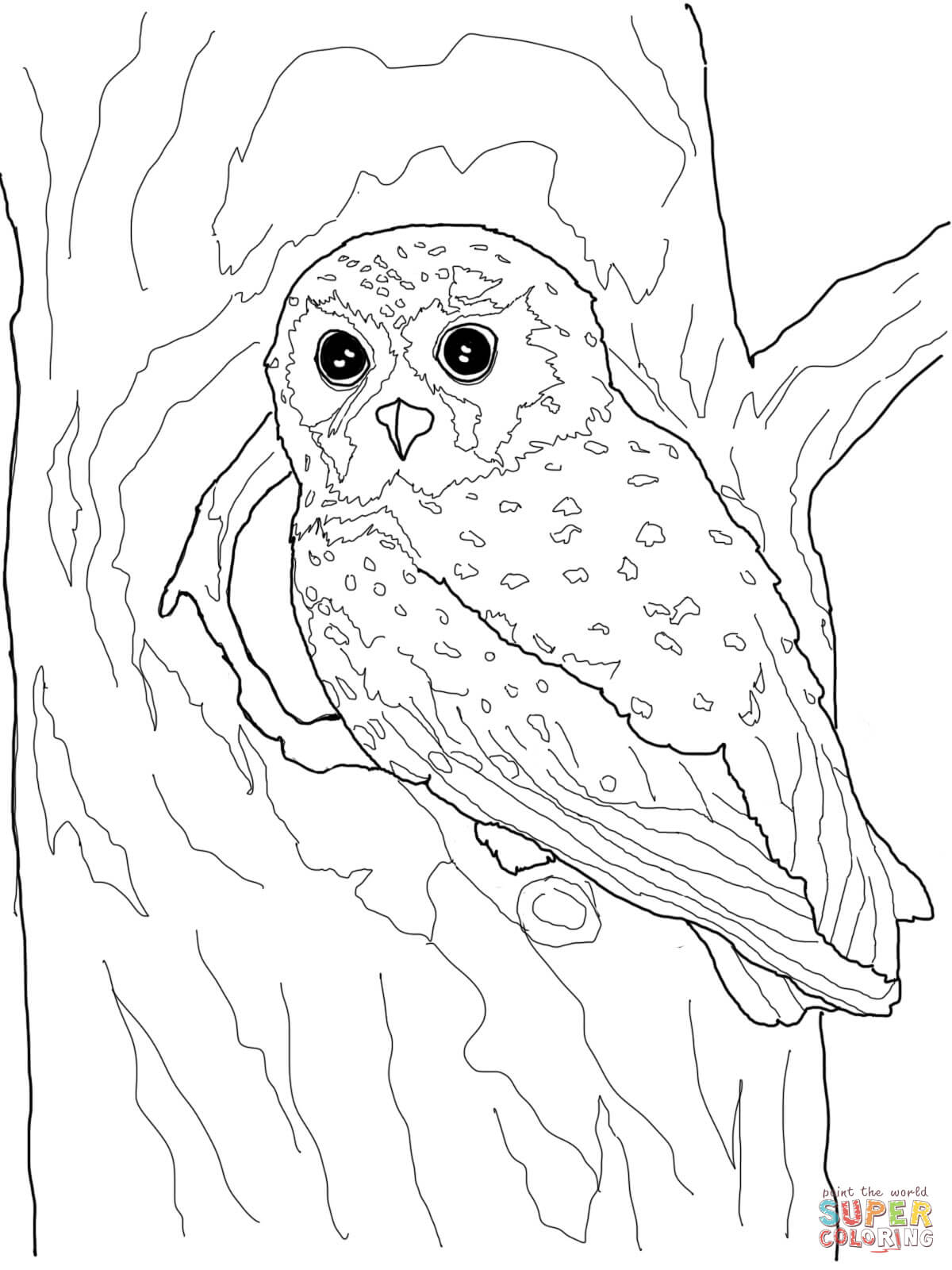 Owls Coloring Pages | Free Coloring Pages - Free Printable Owl Coloring Sheets