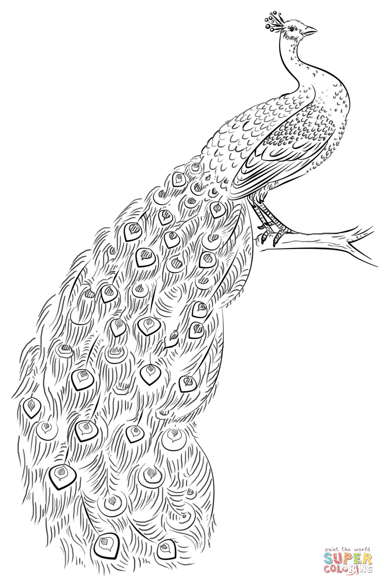 Peacock Coloring Page   Free Printable Coloring Pages   Mandalas - Free Printable Pencil Drawings
