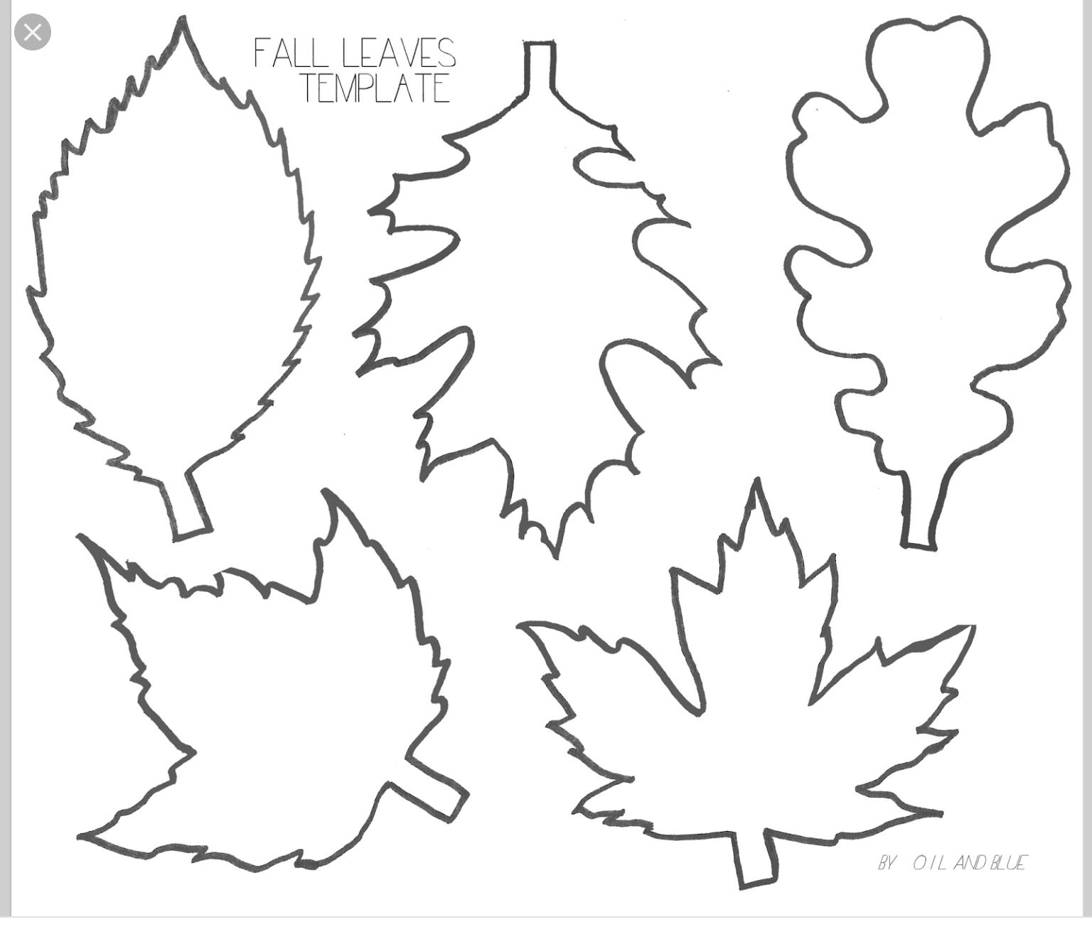 Pinlucie Davis On Skolka Worksheets | Leaf Template, Leaf - Free Printable Leaf Template