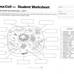 Plant And Animal Cell Diagram Worksheet | Printable Diagram   Free Printable Cell Worksheets