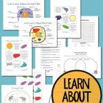 Plant And Animal Cell Printables Grades 4 6   Free Printable Cell Worksheets