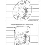 Plant And Animal Cell Worksheet   Siteraven   Free Printable Cell Worksheets
