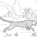 Running Cheetah Coloring Page | Free Printable Coloring Pages – Free Printable Cheetah Pictures