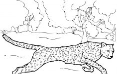 Running Cheetah Coloring Page | Free Printable Coloring Pages – Free Printable Cheetah Pictures