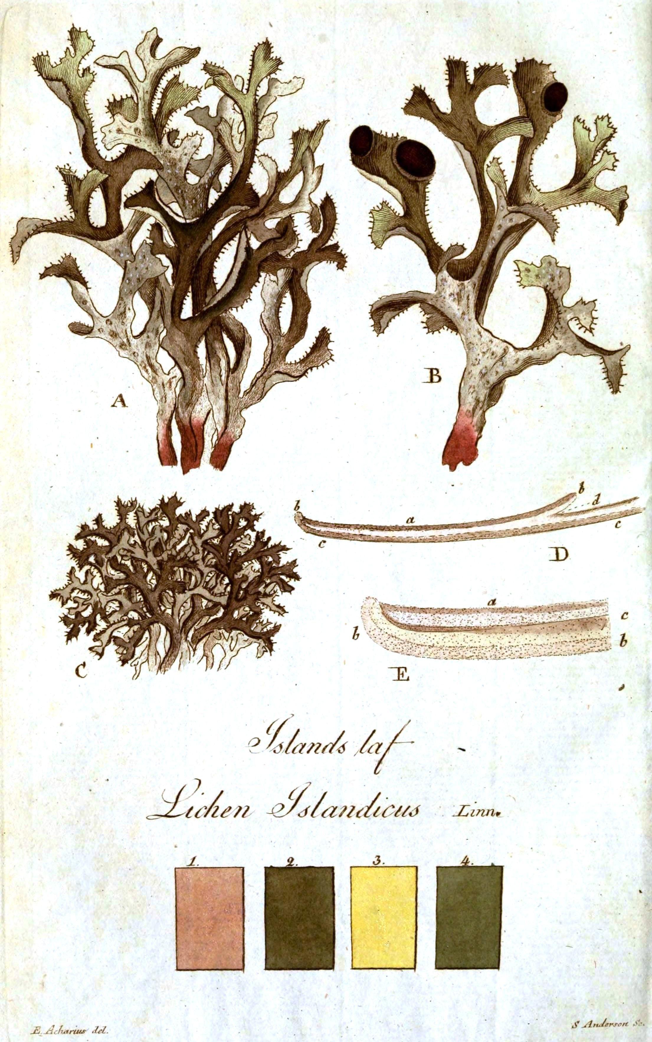 Vintage Printables   Mycology   Free Printable Art, Vintage Art - Free Printable Vintage Art
