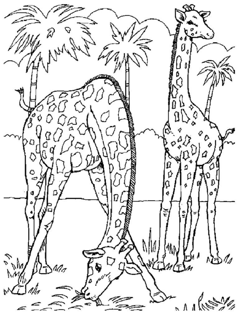 Wild Animal Coloring Pages | Animal Coloring Pages | Pinterest - Free Printable Wild Animal Coloring Pages