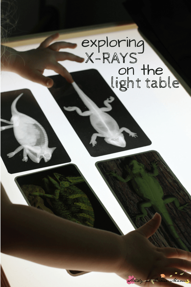 Zoology: Exploring X-Rays On The Light Table ⋆ Sugar, Spice And Glitter - Free Printable Animal X Rays